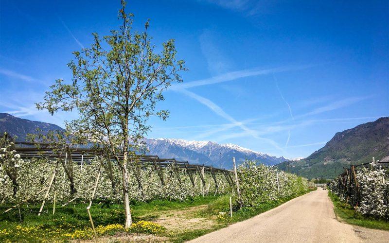 Orchards between Bolzano & Merano