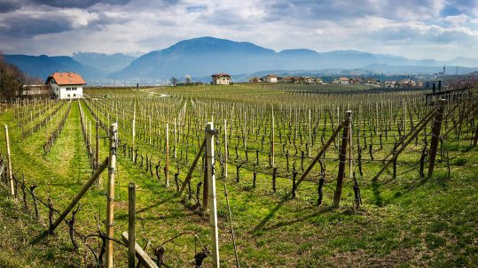 South Tyrol Wine Road