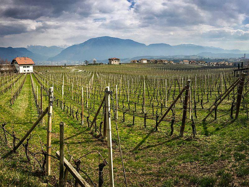 South Tirol Wine Road