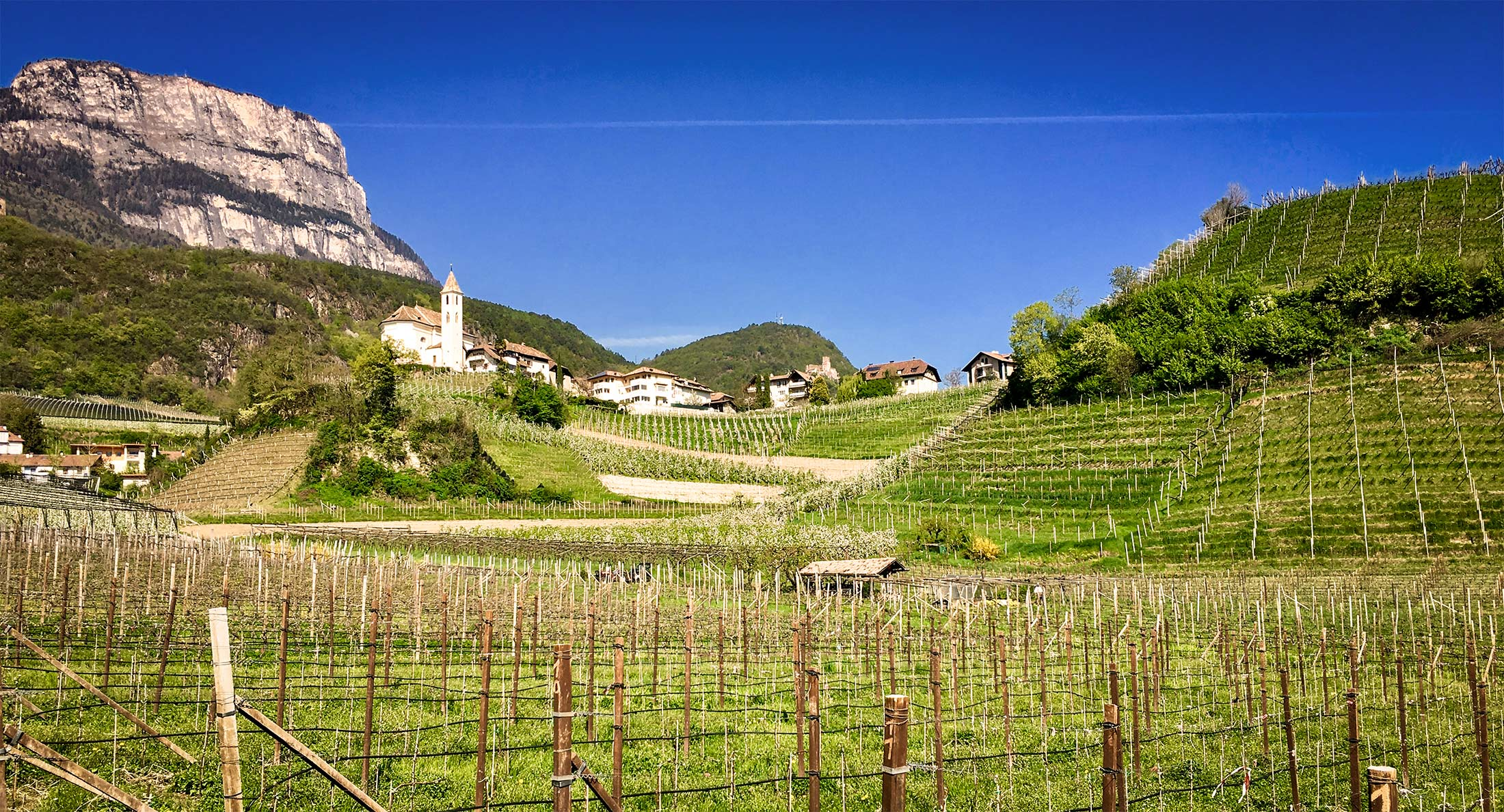 Med South Tyrol Vineyard